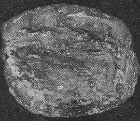 Рис. 1. Кусок янтаря массой 1270 г. Язовское проявление