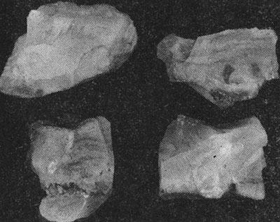 Рис. 4. Неоднородное строение костяного янтаря. Клесовское месторождение